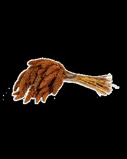 Kolbenhirse französisch rot 15kg