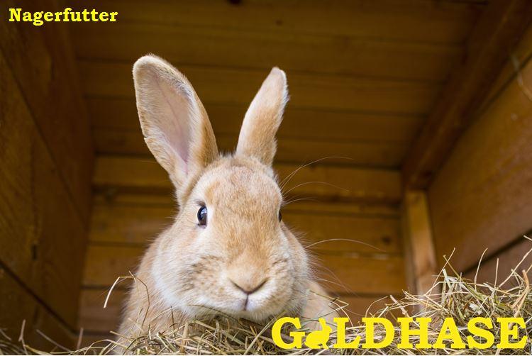 GOLDHASE Hasenfutter mit Häschen