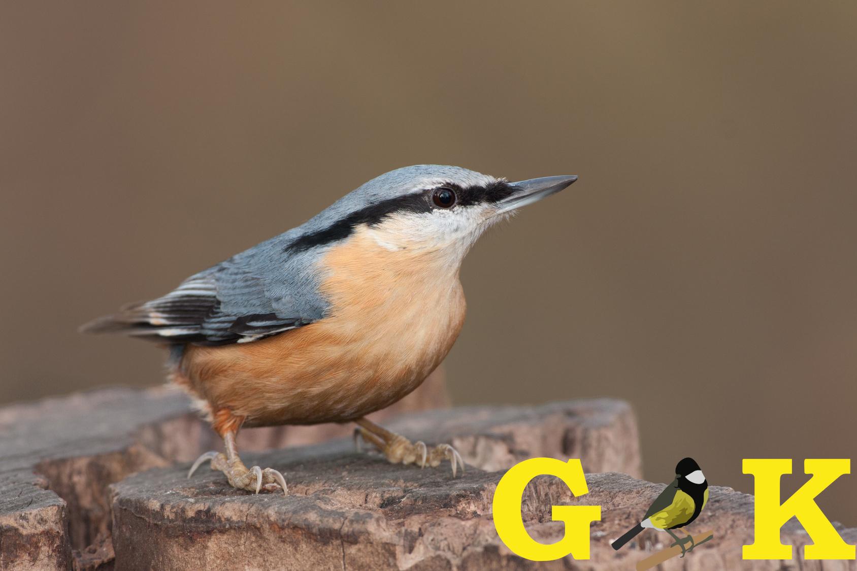 GOLDKORN Vogelfutter
